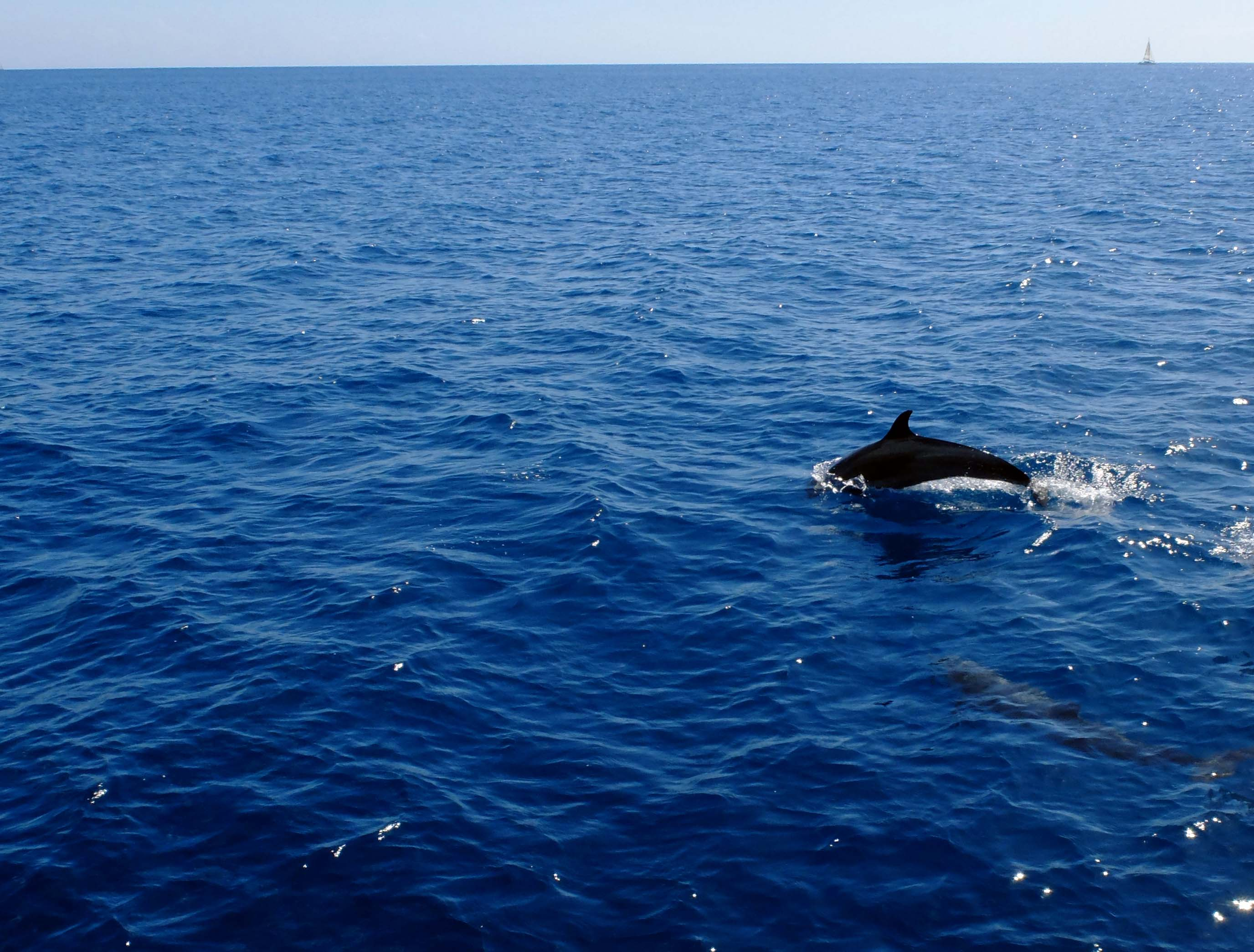 Whalewatching Dominica