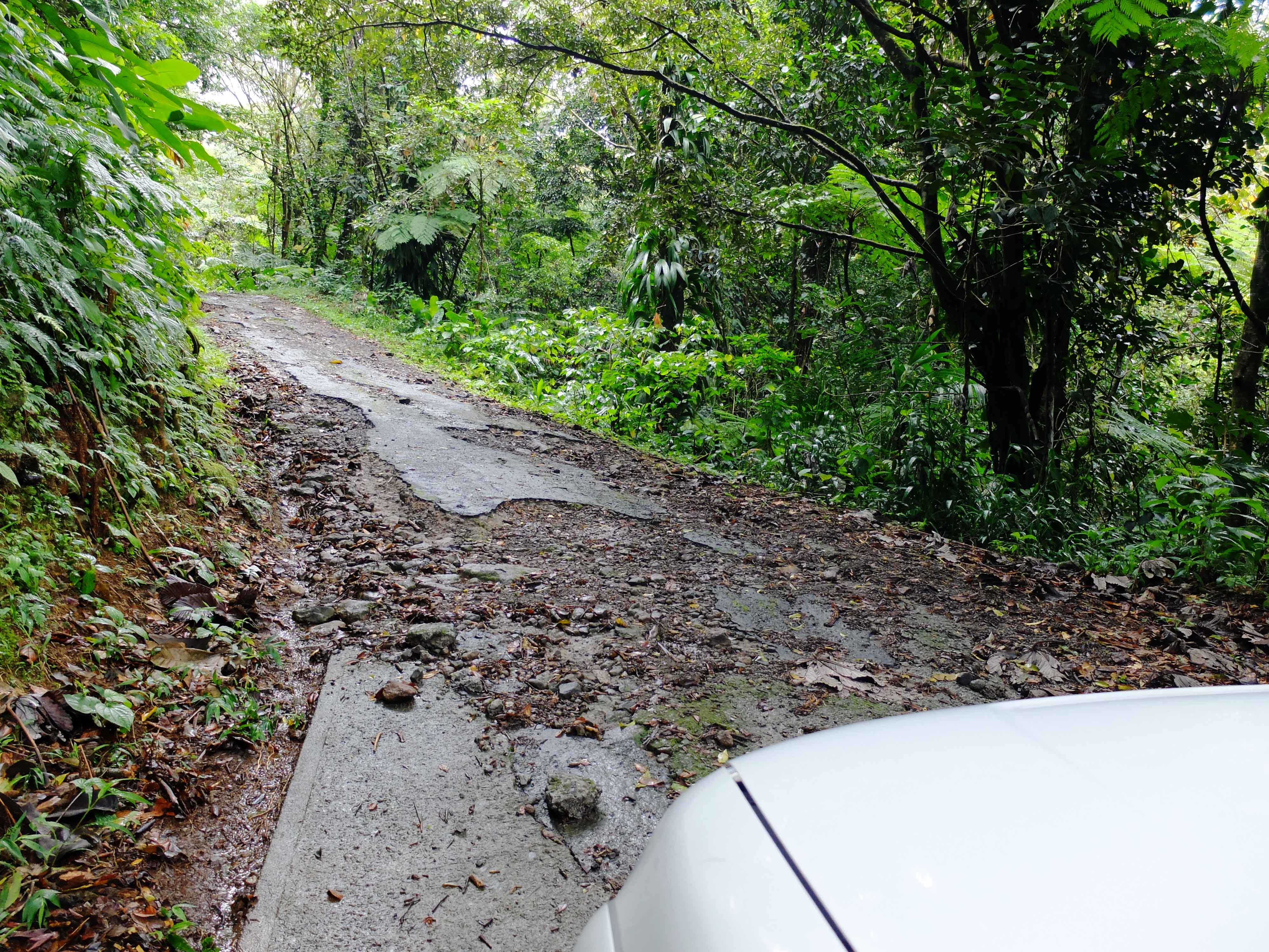 Way to Middleham Falls - Dominica